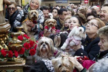 Fiestas deSan Antón 2019, el patrón de los animales