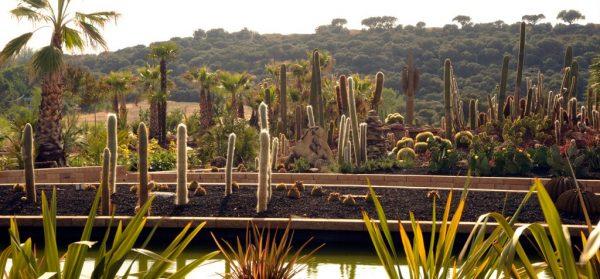 cactus desert city