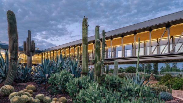 Desert City Cactus