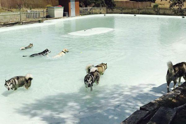 Descubre las piscinas y parques acuáticos para perros en Madrid