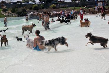 Descubre las piscinas para perros para este verano 2019