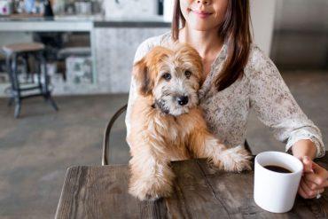 theDoger, la primera cafetería que ofrece cachorros en adopción