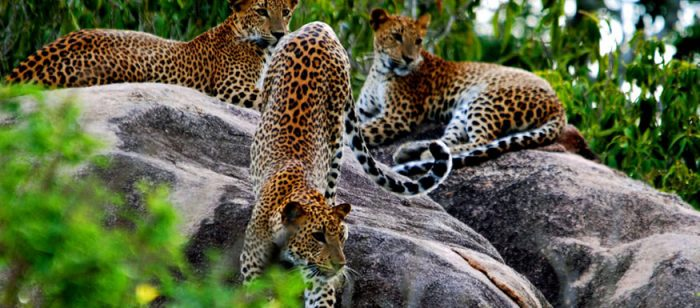 Fauna diversa es otro atractivo de Sri Lanka.