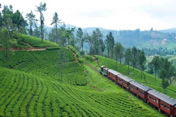 Paseos inolvidables en tren a través de campos en Sri Lanka.
