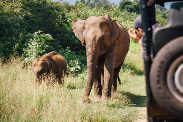 La mayor reserva de elefantes del mundo en Sri Lanka.