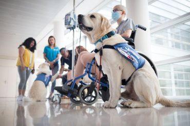 Usan perros de terapia para la lucha contra el cáncer infantil