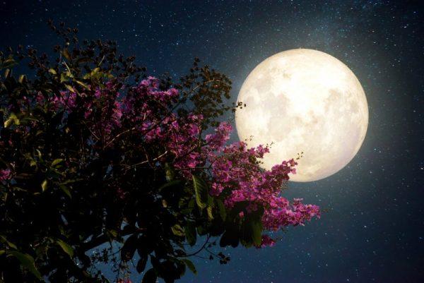 Mayo nos trae la Luna de las Flores, la última superluna del año