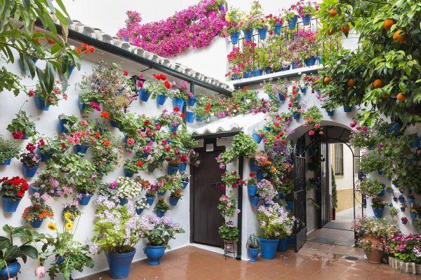 Los Patios de Córdoba abren sus puertas virtualmente