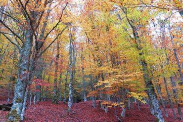 Hayedo de Montejo, el paraiso otoñal que disfrutar en Madrid