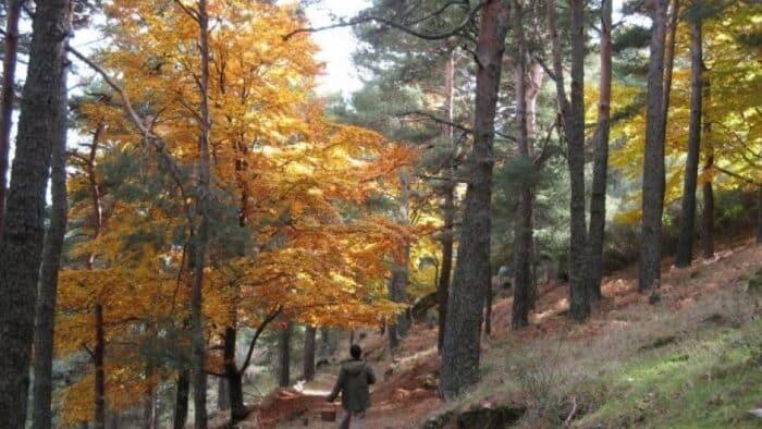 240 actividades gratuitas para disfrutar de la primavera en Madrid