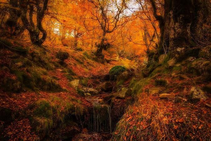 10 espectaculares paraisos de otoño a un paso de Madrid