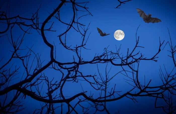 Este Halloween disfruta de la misteriosa Luna azul
