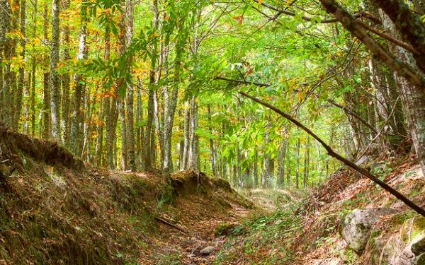 Los 8 bosques de cuento de hadas de la Comunidad de Madrid