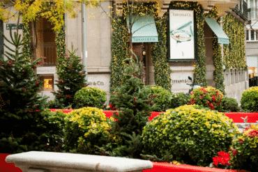 El Barrio de Salamanca acoge un jardín urbano de abetos de Navidad