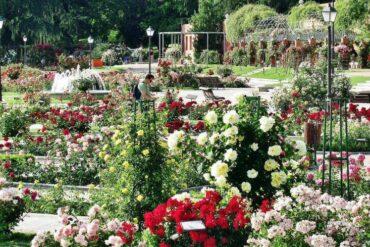 Las rosaledas más bellas de Madrid esta primavera