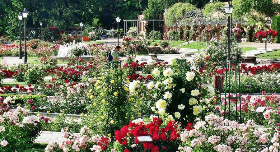 Los mejores parques para sentir la magia de la primavera en Madrid
