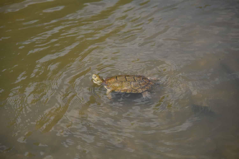 La renaturalización del río Manzanares, premio por la Biodiversidad