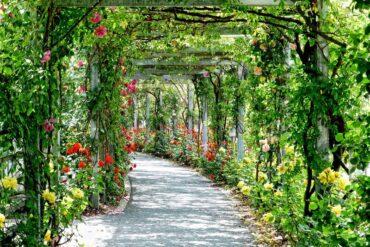 Se busca la Rosa de Madrid más bonita de esta primavera 2021