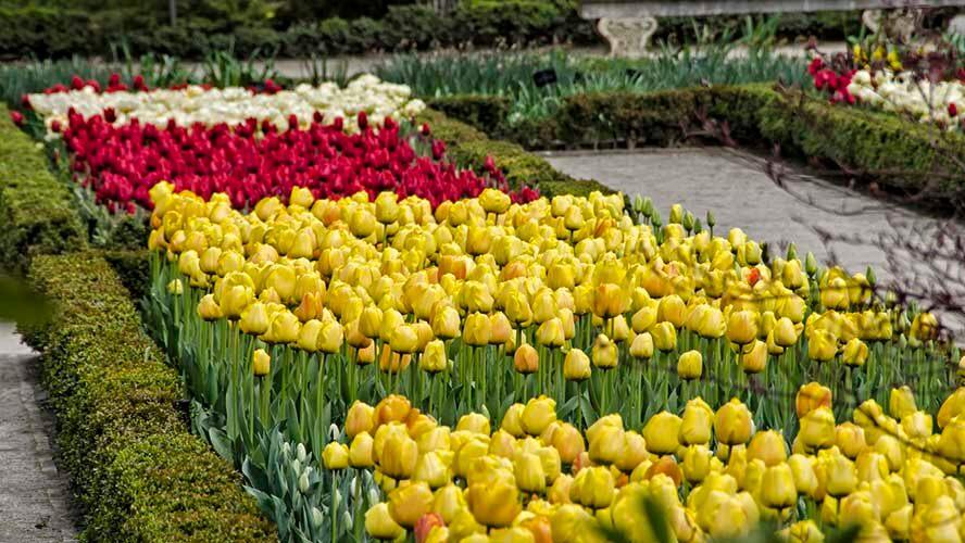 El Jardín Botánico de Madrid se engalana con los colores de los tulipanes