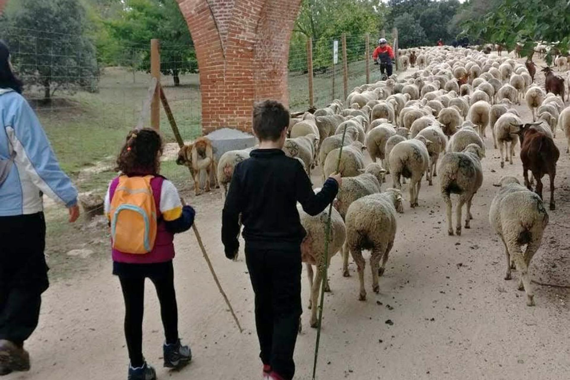La ovejas recorren Madrid gracias a la Fiesta de la Trashumancia 2021